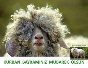 kurban-bayrami-mesajlari-mubarek-olsun